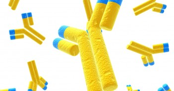 yellow antibodies