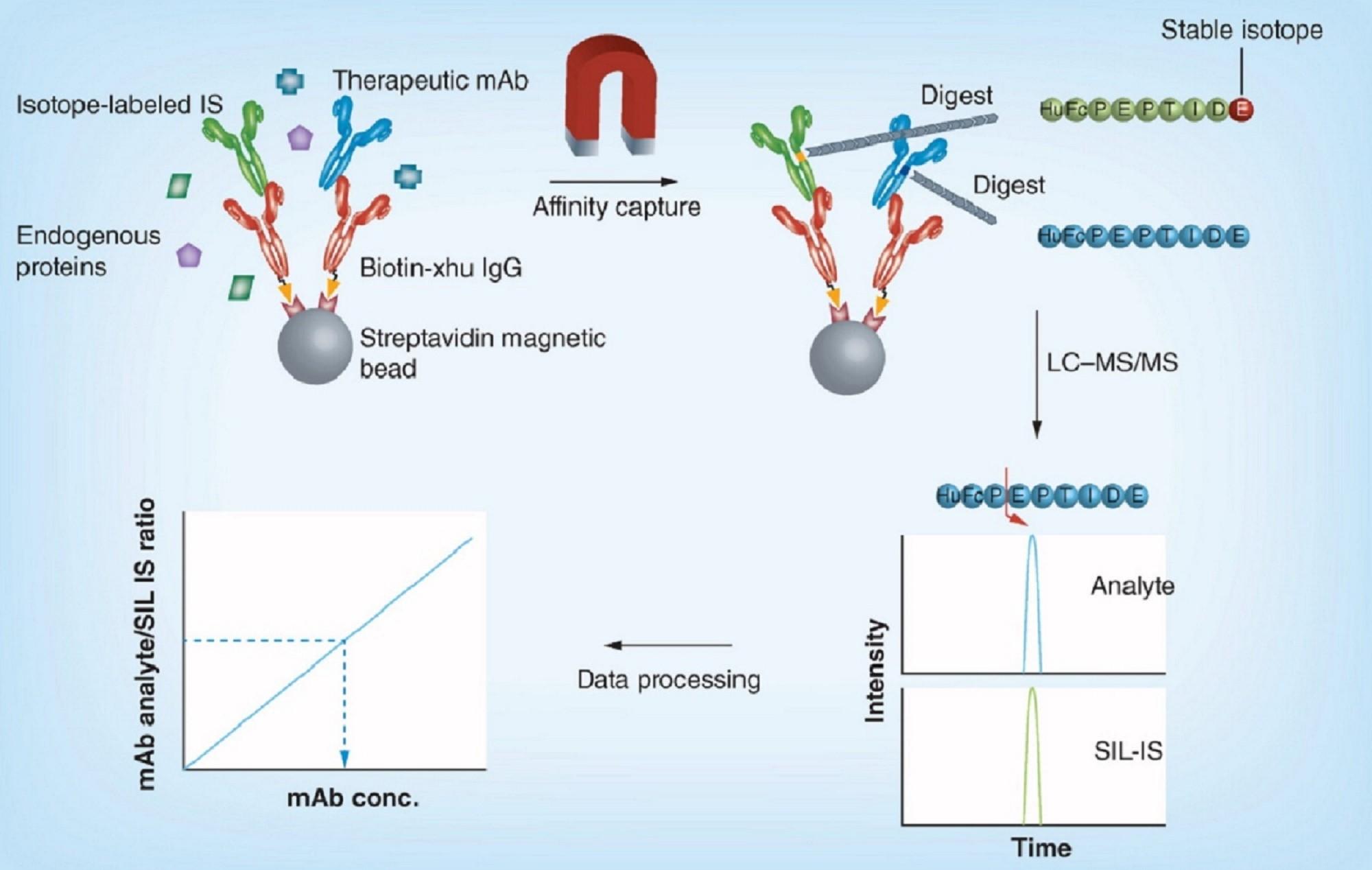 b - Validation of a biotherapeutic immunoaffinity article (8.15)
