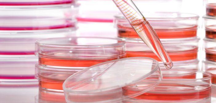 cancer-reserch-pipette-petri-dish