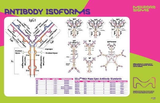 Antibody_Isoforms_Poster