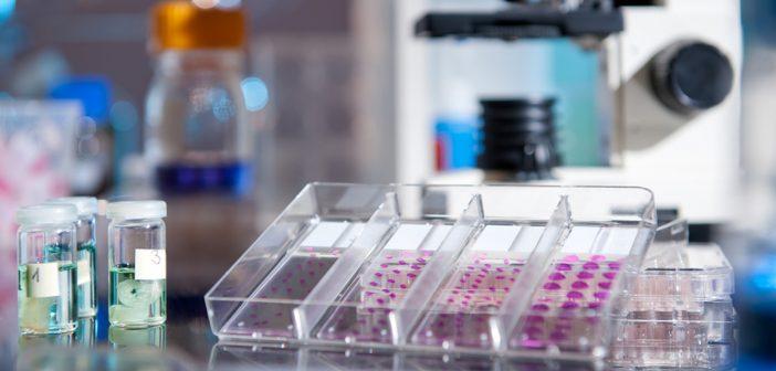 cancer pathology biology