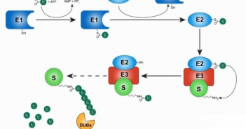 ubiquitin system feature image