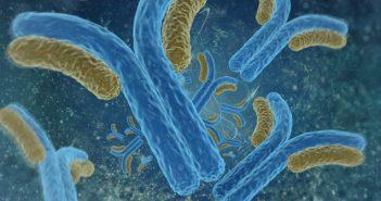 antibodies-702x336