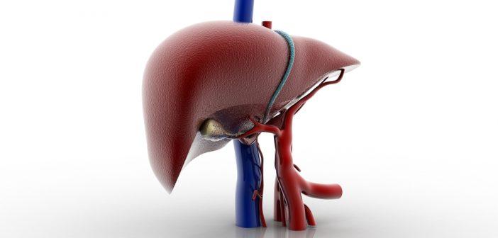 liver 85601176