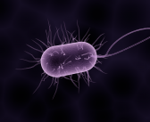 New biosensor device developed for diagnosis of bacterial infections
