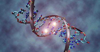 DNA oligo