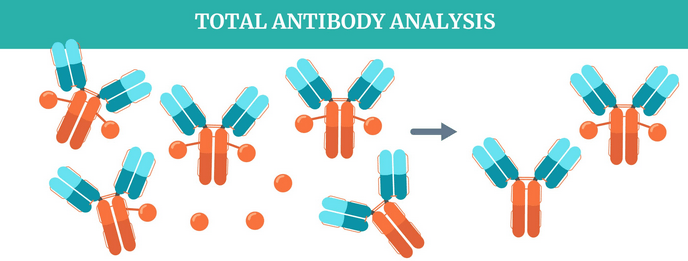Bioanalytical strategies for PK analysis of antibody-drug conjugate therapeutics using LC–HRMS & LC–MS/MS