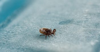 Lyme-disease-tick