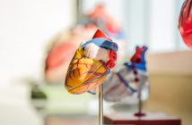anatomical-model-of-heart