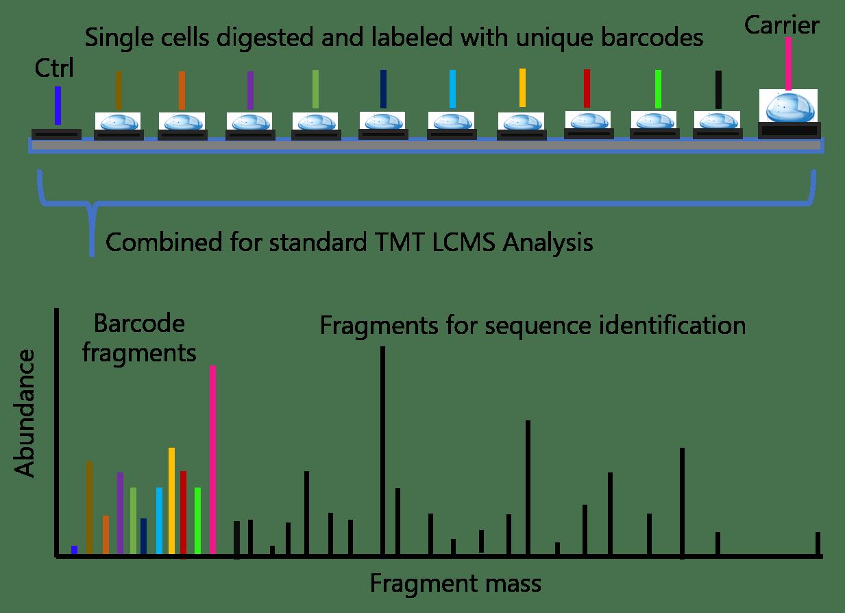single cell proteomics-tmt-method