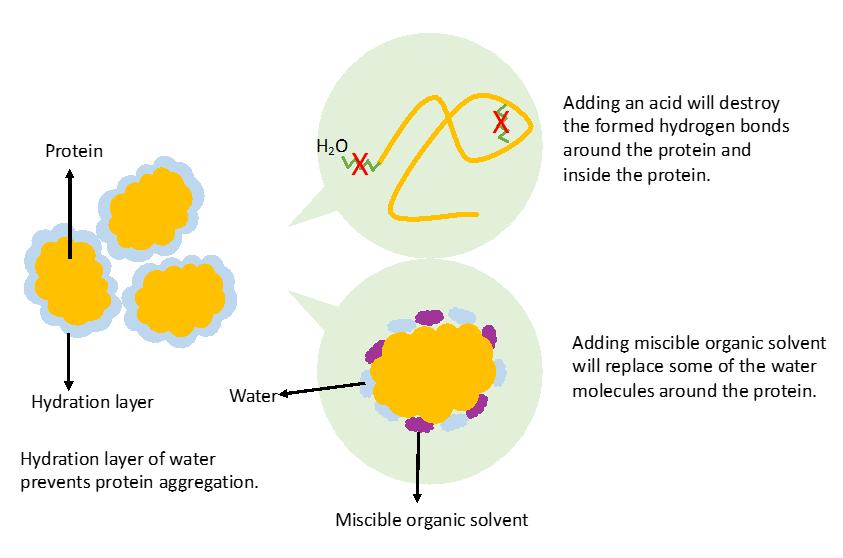 protein-precipitation-diagram